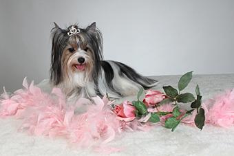 Prinzessin Fanny zu Gast