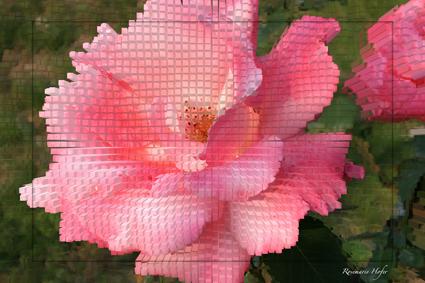 Cube-Flower-I-by-Rosemarie-Hofer