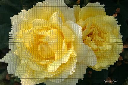 Cube-Flower-IV-by-Rosemarie-Hofer
