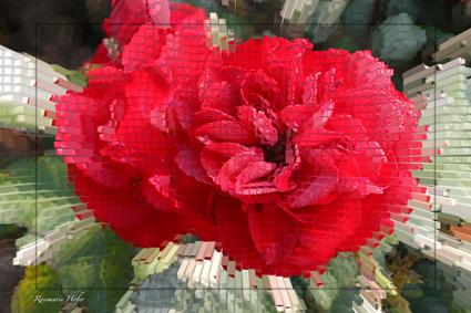 Cube-Flower-V-by-Rosemarie-Hofer