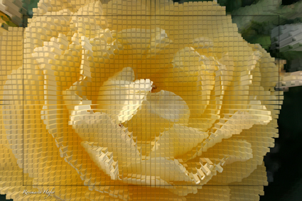 Cube-Flower-VI-by-Rosemarie-Hofer