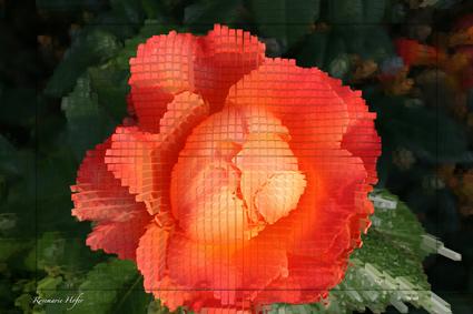 Cube-Flower-VIII-by-Rosemarie-Hofer