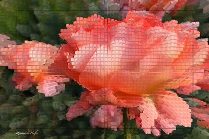 Cube-Flower-X-by-Rosemarie-Hofer