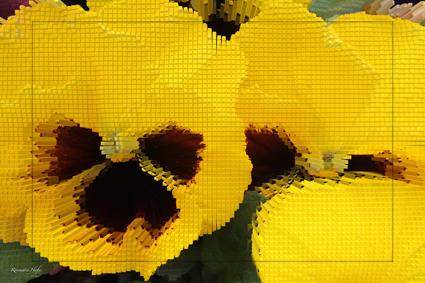 Cube-Flower-XIII-by-Rosemarie-Hofer