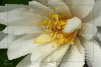 Cube-Flower-XV-by-Rosemarie-Hofer