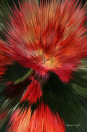 Flower-Explosion-IV