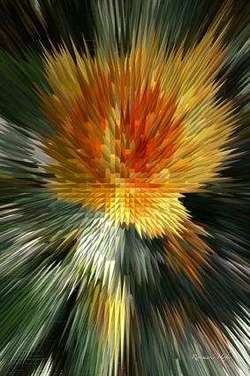 Flower-Explosion-V
