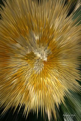 Flower-Explosion-VII