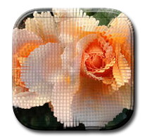Button–App-PHOTO-ART-by-Rosemarie-Hofer