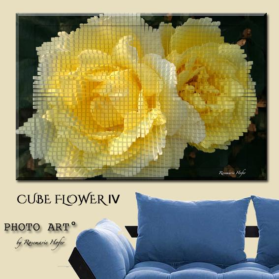 CUBE-Flower-IV-PHOTO-ART°-by-Rosemarie-Hofer-Internetposting
