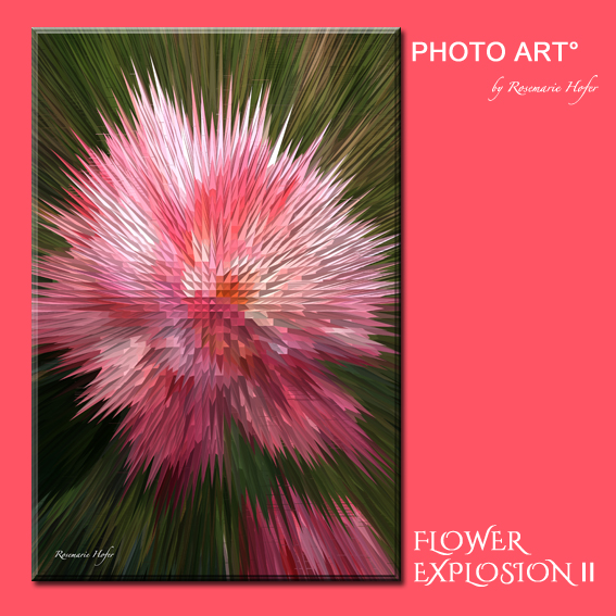 Flower-Explosion-II-PHOTO-ART°-by-Rosemarie-Hofer-Internetposting