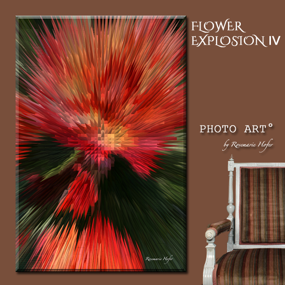 Flower-Explosion-IV-PHOTO-ART°-by-Rosemarie-Hofer-Internetposting